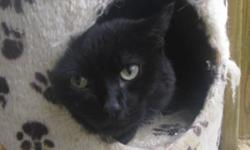 Breed: Domestic Short Hair   Age: Adult   Sex: M   Size: M Primary Color: Black Age: 4yrs 11mths 1wks Animal has been Neutered   View this pet on Petfinder.com Contact: BC SPCA Quesnel and District Branch | Quesnel, BC