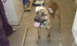 Breed: Boxer   Age: Adult   Sex: M   Size: L Hi there my name is Deno. I am a 2 year old boxer X. I am a very friendly boy. I like some other dogs. I am very new so keep checking for updates!   View this pet on Petfinder.com Contact: Bonnyville District