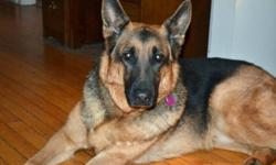 Breed: German Shepherd Dog   Age: Adult   Sex: M   Size: L Kane is a magnificent German Shepherd born around April 2004 who was surrendered to Kiko due to a serious illness in the family that necessitated an extended trip out of the country. Weighing in