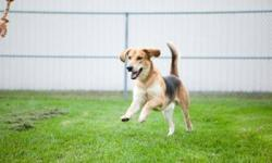 Breed: Shepherd Hound   Age: Adult   Sex: M   Size: M This is a courtesy post. For more information, please contact us at 905-263-8247     Please note that the animals in our program are available for adoption only to individuals located in the Region of