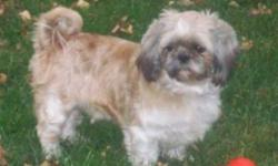 Breed: Shih Tzu   Age: Adult   Sex: M   Size: S Rosco is a sweet Shitzu mix. He is approximately 3 or 4 years old and is currently being spoiled in foster care. He is housebroken, going to the door when he wants out and barking when he wants back in. He