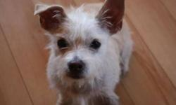 Breed: Terrier   Age: Adult   Sex: M   Size: S Theo is a high energy 1 year old Neutered Terrier cross that was rescued off the streets of Ensenada Mexico by a volunteer from United Hope for Animals. He was flown up to Canada in July after being neutered