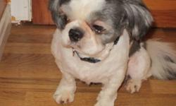 Need to rehome our beloved pet Shih Tzu's Main picture is black/white Imperial Toy male Other two are black/white and brown/white females Good with other pets and children Hypoallergenic and non-shedding   Call 613-472-1314