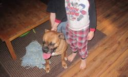 fawn female boxer not fixed and she comes with papers she is 4-5 years of age she dose not get along with our other dogs good with kids  and house trained will not beg for food she is a great dog but we dont need a dog fight tail doced up to date with her