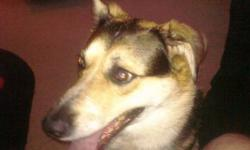 """FOR SALE URGENT!  URGENT! 4 year old Australian Collie for sale!  All shots are up to date, dog is super healthy!  Very good with kids!! Gentle and warm!  Super intelligent.  Reason for selling, family breakup """"divorce"""".     I  WANT BONNIE TO GO TO A GOOD"""