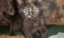Breed: Tortoiseshell   Age: Baby   Sex: F   Size: M Enya, Rouky, Mali and Maya are four adorable kittens born on September 2nd, 2011. Their mom, a stray cat, was rescued days before having her babies. Mom has been spayed since then. This little group is