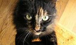 Breed: Tortoiseshell Dilute Tortoiseshell   Age: Baby   Sex: F   Size: L Andrina is from a kill shelter in northern BC. She is a very sweet cat. She is a little camera shy, so the pictures here on petfinder are not her, but similar cats. She is approx.