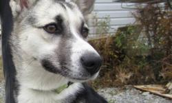 Breed: Husky   Age: Baby   Sex: F   Size: S   View this pet on Petfinder.com Contact: Great Slave Animal Hospital | Yellowknife, NT