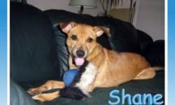 Breed: Terrier   Age: Baby   Sex: M   Size: M Shane is the SWEETEST boy despite a rotten start to his short 10 month life. He was found lying in a pile of garbage with one of the worst cases of mange we have ever seen. The vets actually thought it was