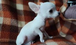 I have for sale 4 chihuahua puppies 3 males and 1 female.  Have vaccinated and worm examinated by the vet.  They are trained on the pipi pad.  Both parents are here at home.  The puppies are very enjoyable, pure-bred, ready to leave by Nov. 15, call for