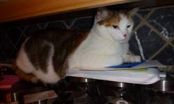 Due to allergies we need to find a new home for our 2 cats. Our female is a beautiful calico domestic short hair. She is 2 and a half years old and is spayed and declawed. Being declawed she is strictly a house cat. She is completely healthy and is very
