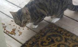 There is a beautiful stray male tabby in Kearney Lake! He is very loveable sweet cat! He would make a wonderful pet! I would love to take him in myself but I already have a cat and my spouse is allergic! He sits outside my door and meows to get in...I