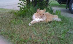 I have a beautiful older cat to give to a home with no small kids , older kids is fine. He is a great friendly, happy, hyper cat who has lots to give. He loves to snuggle and play. He has all his needles and his neutered. He loves hanging around outside