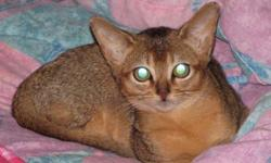 We have a male and a female ruddy purebred registered abyssinian kittens, ready for their forever homes.  They are bright and inquisitive, and very warm and loving.   They are vaccinated and dewormed.  My abys come from champion and grand champion lines,