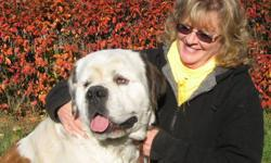Beautiful female St. Bernard is looking for a family to guard and to spend time with.   This girl rivals a pyrenese when it comes to predetor control, yet is soft and sweet tempered.   She loves people, especially children, and just wants to spend her day