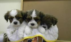 """DogPatch Puppies (est.1996) is closing in November due to sale of property. Price reduced from $500 to $400. Friendly, happy, very non allergenic and smart. """"Love Life Dogs"""". Reserve a puppy now and pick-up when they are ready to leave. Pups will have 1st"""