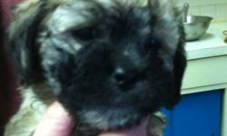 Cute puppy's that need a good home. This ad was posted with the Kijiji Classifieds app.