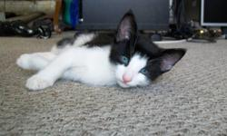 I have 3 black and white kittens to give away and 3 back and white cats to give away. All are very beautiful. Call Allan @ 622-1870.
