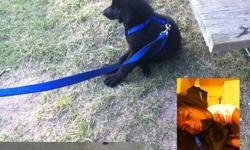 Kenny is a trained 5 month old German Sheppard. He has all of his shots. He comes with his crate and an in/out door that attaches to your patio door. Kenny's collar and other accessories are also included. He is very friendly and is used to being around