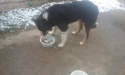 Needs a good home.  Very Playfull Loves to run