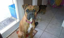 Female fawn boxer looking for good home.  She is 15months old.  VERY good girl. Great with kids I have 2 teenagers and a baby that she plays with al the time.  We just don't have time for a puppy.  She has all her shots up to date, she is spayed and micro