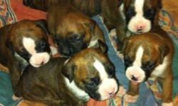 I have 2 beautiful boxer puppies Left , 1 female and 1 male , they will be ready november 21st , tails docked, first needle and dewormed , they need loving homes, please call i will not respond to email This ad was posted with the Kijiji Classifieds app.
