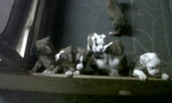 Hi, my name is Chad. I am selling pure bred boxer puppies. They will be ready December 18th. Just in time for christmas. I will hold them till the day of christmas for an additional cost of $50. Or you can pick the puppy up on December 18th, but I will