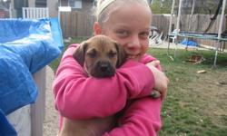 Hi!  I am Lulu! I am a Bull Mastiff crossed with a Beagle.  I don't think I'm going to be a big girl....but I am sure BIG on love! I was found alone and abandoned in Pine Falls Mb. I am being fostered with Winnipeg Pet Rescue Shelter and I am looking for