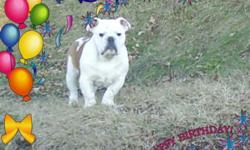 I have a beautiful male bulldog. Both parents are purebred bulldog. Puppy is 15 weeks old. Excellent temperment.
