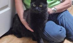 Lenny is a sweet 2 yr. old boy who loves attention and being petted.  He is looking for his forever home where he can be loved and pampered as a member of the family.  Lenny would do best in a family with older children or in an adults only home.  An