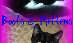 We have 2 cats for sale, Named Boots & Mittens ! They are sisters, we gotten them from a humane society & they are both very friendly, affectionate,litter trained, playful, & are used to other small dogs and kids! Unfortunately, my sister moved back home
