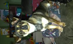 Selling my unaltered pekingnese chihuahua mix with kennel.  Missy is fully kennel trained she sleeps in kennel at night and goes in kennel when i go out. She has a good demeanor she loves other dogs and children.  I just do not like small dogs and I am