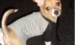 Male chihuahua for sale. Playful and loveable! Great with kids! Trained on pee pads and also goes outside. We're moving in the new year and are unable to bring him :(   **Must go to a good home!