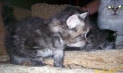 Seven beautiful kittens asking $150-$250. Please call 453-6369 for further information and to view