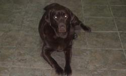 Our Beautiful dog Ellie is 6 years old.  Indoor dog.  Great temperment and great with kids.  Comes with papers.