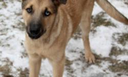 Animal Services has many great dogs looking for homes, these dogs were homeless and abandoned but now have a warm safe place to stay until we can find their forever homes. Please consider adopting today! Check out the many dogs we have available for