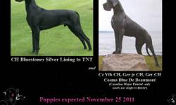 DUE NOVEMBER 25 2011 - Ultrasound confirmed Blue and Black Puppies expected .Waiting list has already begun and we are NOW taking deposits, But space is limited to reserve! ~We are only taking 2 more deposits at this time Pet puppies are 1800.00