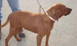 purbred redbone male will run and tree or train for what ever you want to hunt have to many he is a nice dog