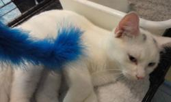 We're delighted to introduce Conan, a young male cat who was found living among a colony of friendly kittens and cats in the West End of Halifax. Although the colony has a generous and loyal caretaker, she could only afford to feed these cats and did her