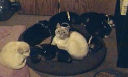 These CUTE! CUTE ! CUTE! puppies are Black Lab cross 7 need a home desperately!! FREE with donation to wonderful sweeties at GiftsofGraceandHope SUPER Great with cats and Kids Give me a shout for pick up GREAT surprise for CHRISTMAS! who doesn`t want a