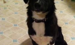 I can no longer keep my dog because we don't have enough time for her. She is a collie corgie crossed with a shitzu. She is 7 months with all her shots and has a Great personality. I'm willing to give her up for 300 OBO. The 300 includes her, a kennel,