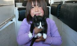 He is so cute! We don't know if he is a boy or a girl. He is a black & white short hair. He is just a little sweety pie and loves to cuddle in bed with you. He loves playing with things that roll around like balls. He is great with other animals like