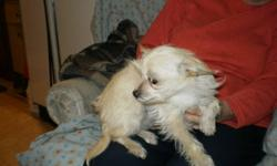 numerous breeds and ages of puppies---email for more info and pics ---these puppies are in a foster home and need to be sold fast call 403-866-3756