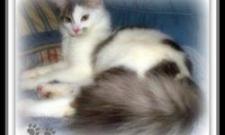 Punky ? is a 5yr old blk & wht neutered male cat,  indoor/occasionally outdoor, very affectionate cat. Loves to cuddle beside you, well behaved cat. but would be very lonely without his companion Ciara. Ciara is a 1yr old spayed female, very pretty