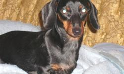 *SELLING FAST  ACT NOW!* We have 2 Puppies left of our litter of 6 they are mostly paper trained and on hard food 1 boy and 1 girl are left   We own the parents (mother from quebec, father from brant area) and this is their third healthy litter.   the