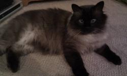 I'm moving and I am unable to take my cat with me.  I adopted him from a rescue group so I am unsure of his exact age.  I think he is about 5yrs old.  Because he is declawed he is strictly an indoor cat.  I have had him shaved a few times and he is very
