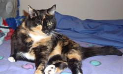 Dixie was left in our care suddenly when her owner moved out west with just three days? notice. A quiet but tremendously affectionate cat, we know she?s about three years old and has spent her entire lifetime indoors. She was used to the company of other