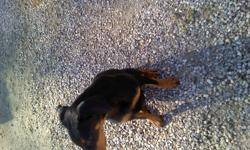 I have a King doberman pincher for sale, hes 6 monthgs old, great with kids, awesome personality. im selling him because im moving into a house that doesnt allow dogs. $800 OBO. phone 250-341-1553 after 6 pmcranbrook.   ask for Jesse