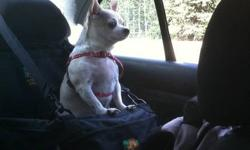 I have a 6.5 year old alpha chihuahua. She is chubby, fun, loving and a tad dominate. I am looking for the right match for her. At first I had pretty specific requirements. Now they are not so specific. Breed is no of much concern. I was kinda hoping for