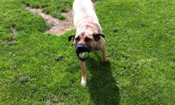 Vespa is a energetic , playful dog. She loves to play ball. She is need of a home that is in a safer place. The is a presa canario x. She has all shots up to date. Has bin to school. Family rasied. Asking $200 or bo This ad was posted with the Kijiji